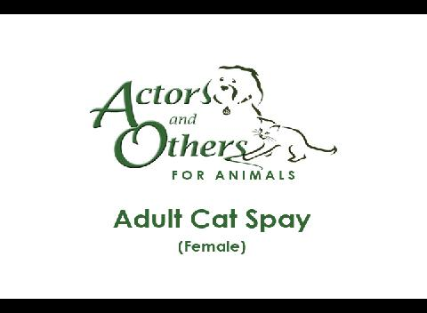 Adult_Cat_Spay